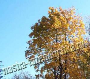 влагозарядковый полив растений осенью