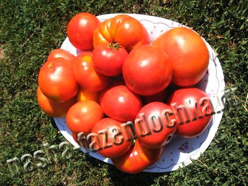 томат, помидор, кетчуп