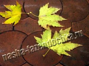 осенние работы в саду, огороде и в цветнике (ноябрь)
