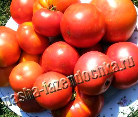 томат (помидор) заправка для борща
