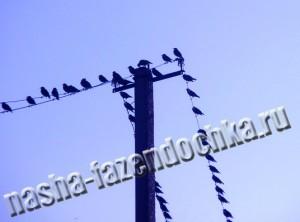 устройства для отпугивания птиц