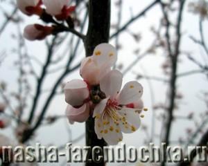 сад, цветут деревья, садовые опрыскиватели