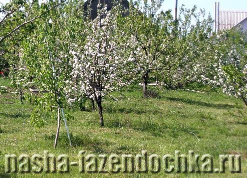 Сидераты – зеленые удобрения, сад