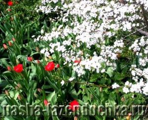 Компост - питание для растений, сад