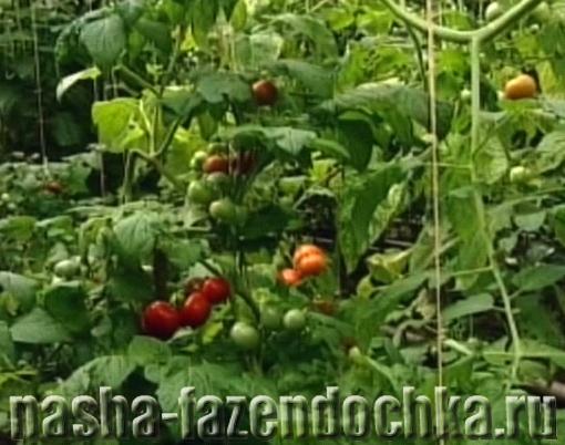 Теплица для овощей. помидор