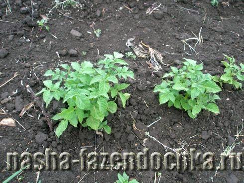 Обработка почвы под картофель