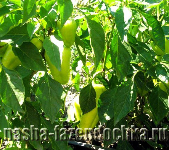 Как повысить плодородие почвы , перец
