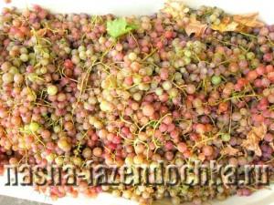 Виноградное вино, вино