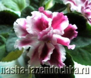 Свежий воздух для комнатных растений
