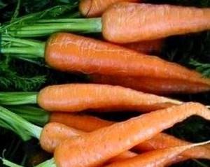 Правильно храним корнеплоды, морковь