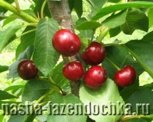 Замораживаем плоды и ягоды