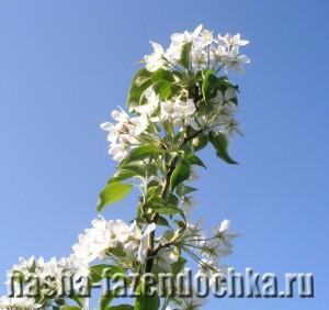 Плодовые деревья -> Особенности весенней посадки деревьев