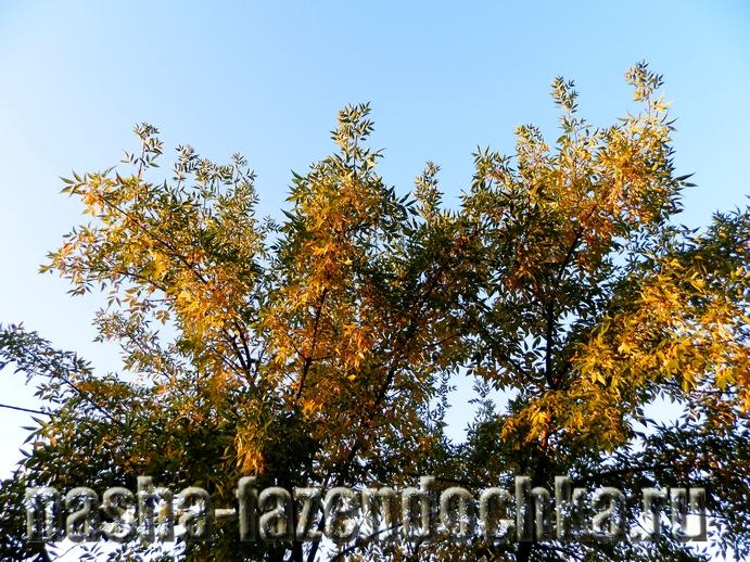 Сезонные работы в саду и огороде в октябре